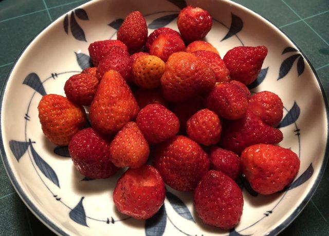 今年はイチゴが豊作でした